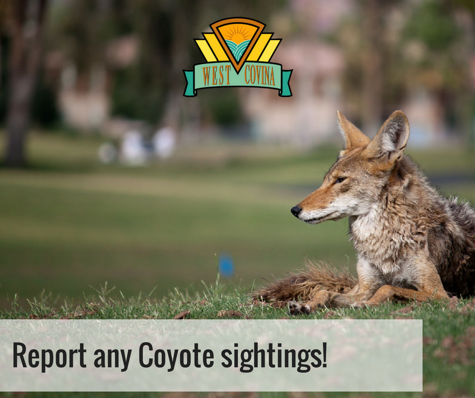 Coyote Management
